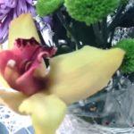 афродизиак в цветочном букете